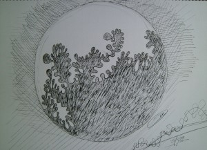 _fractal moon